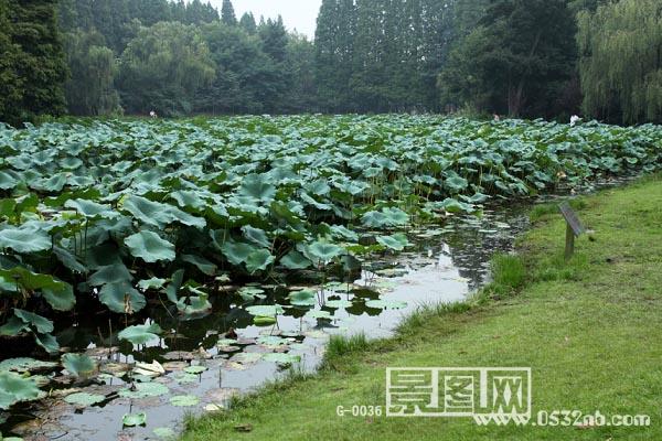 青岛中山公园图片2-青岛中山公园照片-青岛小西湖图片