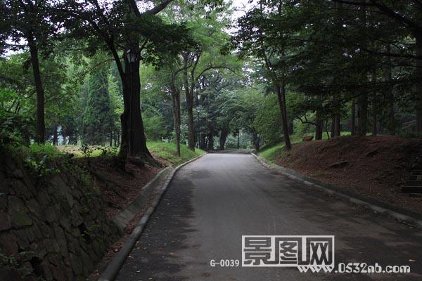 青岛中山公园丛林公路