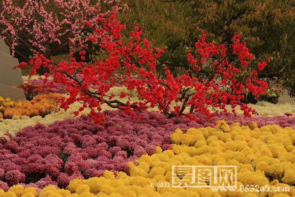 青岛中山公园菊展