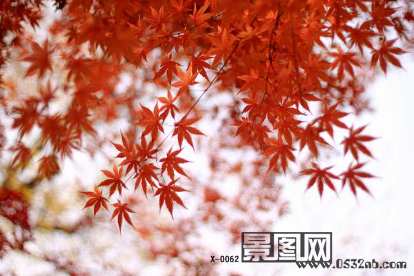 金秋青岛中山公园枫叶风景2