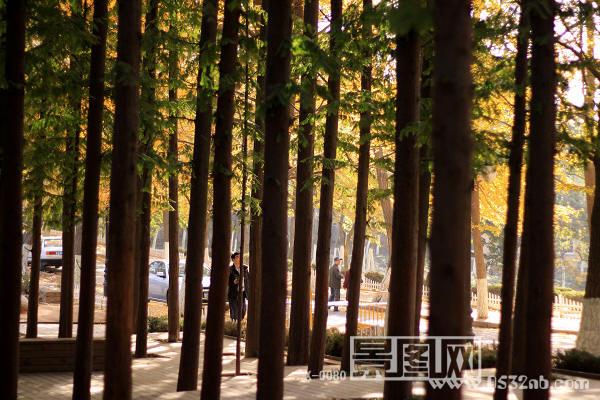 青岛八大关路边丛林公园6