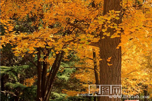 青岛八大关风景秋天